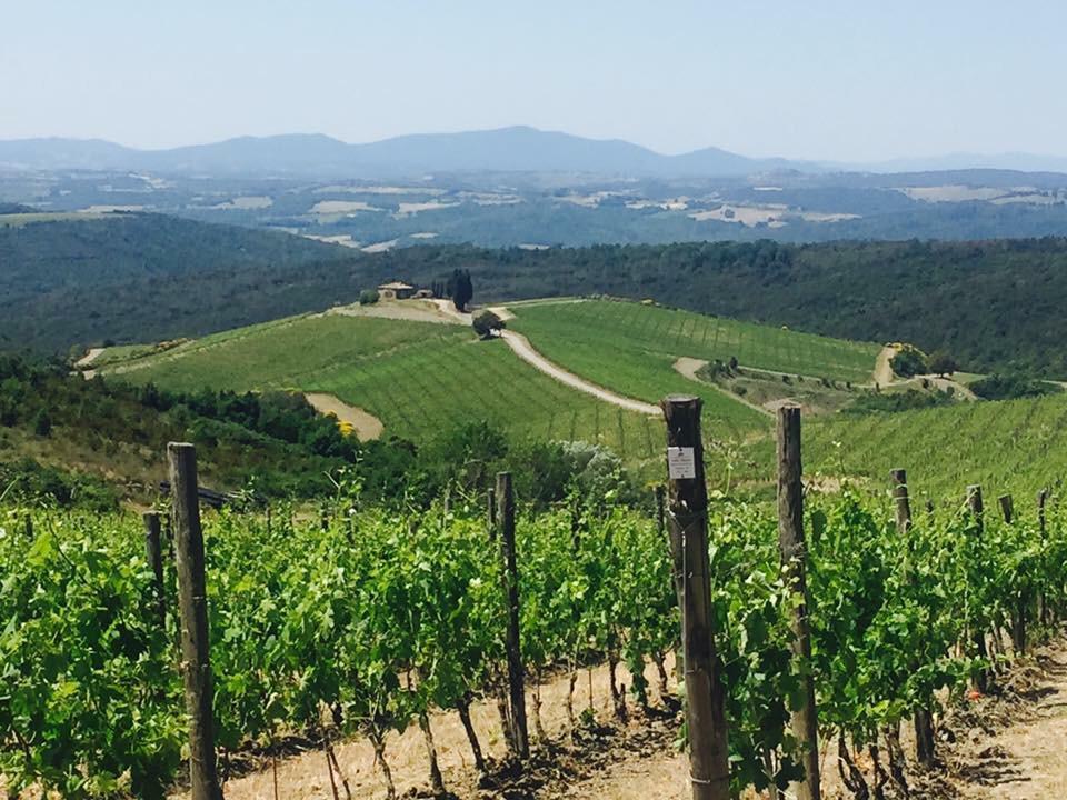 italian wine wineries